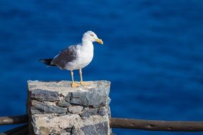 seagull on stone pile at water