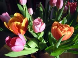 bouquet of colorful tulips in the bright sun