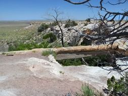 petrified wood desert scenery