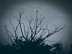 picture of the creepy tree