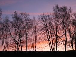 afterglow forest tree sky sunset