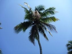 tropical palm tree and blue sky