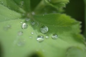 dewdrops on the plant leaf