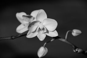 white orchid blossom plant close