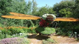 dragonfly of plants and flowers in the garden