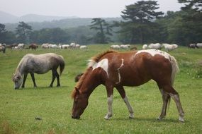 brown grey horses on pasture
