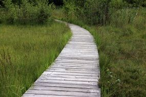 wooden track path in meadow