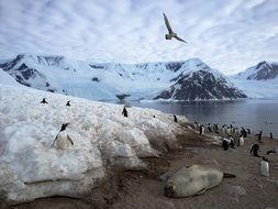 penguins and birds on the coast of Antarctica