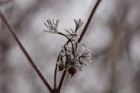 frozen branch plants