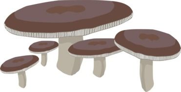 clipart of the mushrooms