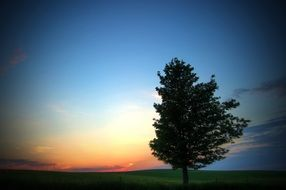 lonely tree summer evening scene