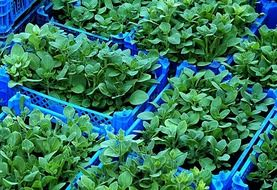 green garden seedlings