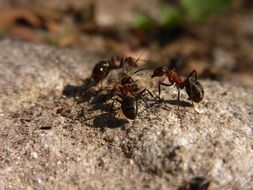 hymenoptera ant on wood