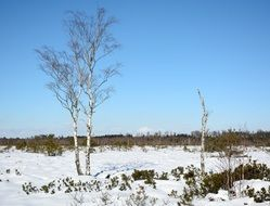 winter snow tree in field