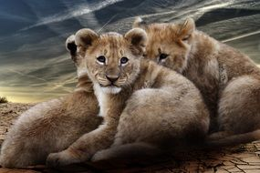 picture of the lion babies