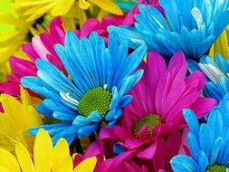 Blue,pink and yellow daisy flowers