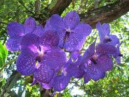 blue orchids on a background of a large green tree