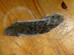 squirrel tail on wooden surface