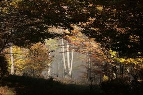 photo of mystic autumn beech forest