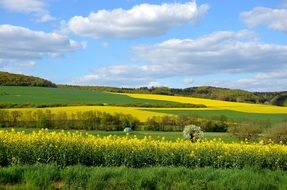 Landscape of the field of rapeseeds