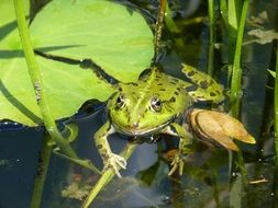 frog water pond green garden