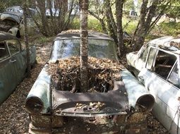tree grown through abandoned car