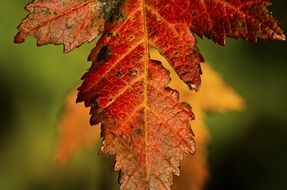brown autumn foliage closeup
