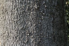 grey tree bark structure