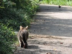 domestic cat on the hunt