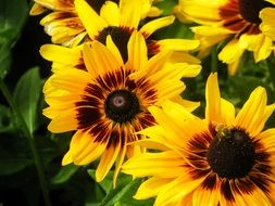 yellow flowers like sunflower
