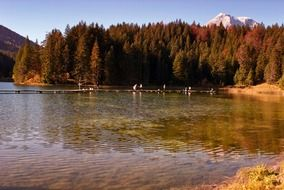 autumn forest on the lake in Austria