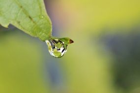 Droping of the water from the leaf