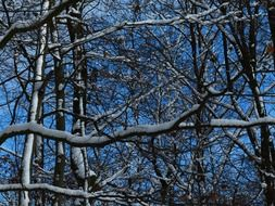 Snowy branches in a forest