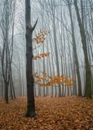 fog at forest autumn nature