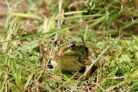 frog sitting in a grass