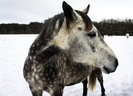 horse on the field in winter