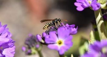 a wasp on a purple flower