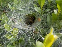 spider cobweb closeup