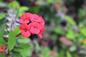 wild plant with red flowers
