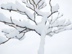 tree in snow close up
