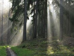 the sun\'s rays make their way into the forest