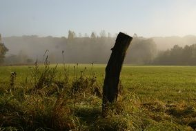 wooden pole on the edge of a green field
