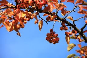 Red berries on a tree branch in autumn