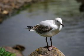 white seagull on a stone in the wild nature
