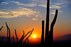 desert nature at sunrise landscape