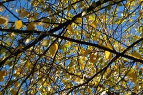 branches with yellow leaves