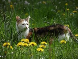 domestic cat on a meadow