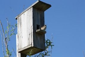 sparrow on a gray nesting box