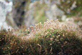 tiny flowers on the rock