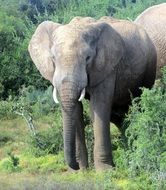 picture of the elephant in national park in Africa